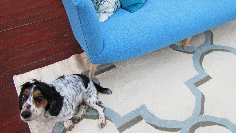 Dog sitting next to Elton Sofa